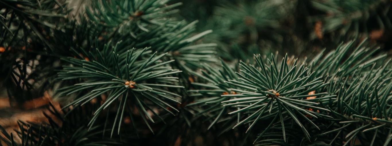 De kerstbomen zijn binnen!